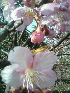 春だぁ〜♪
